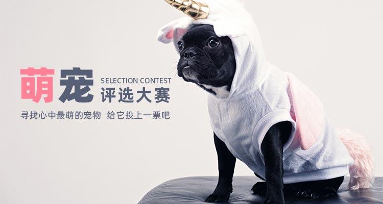 2019年第一届萌宠评比大赛